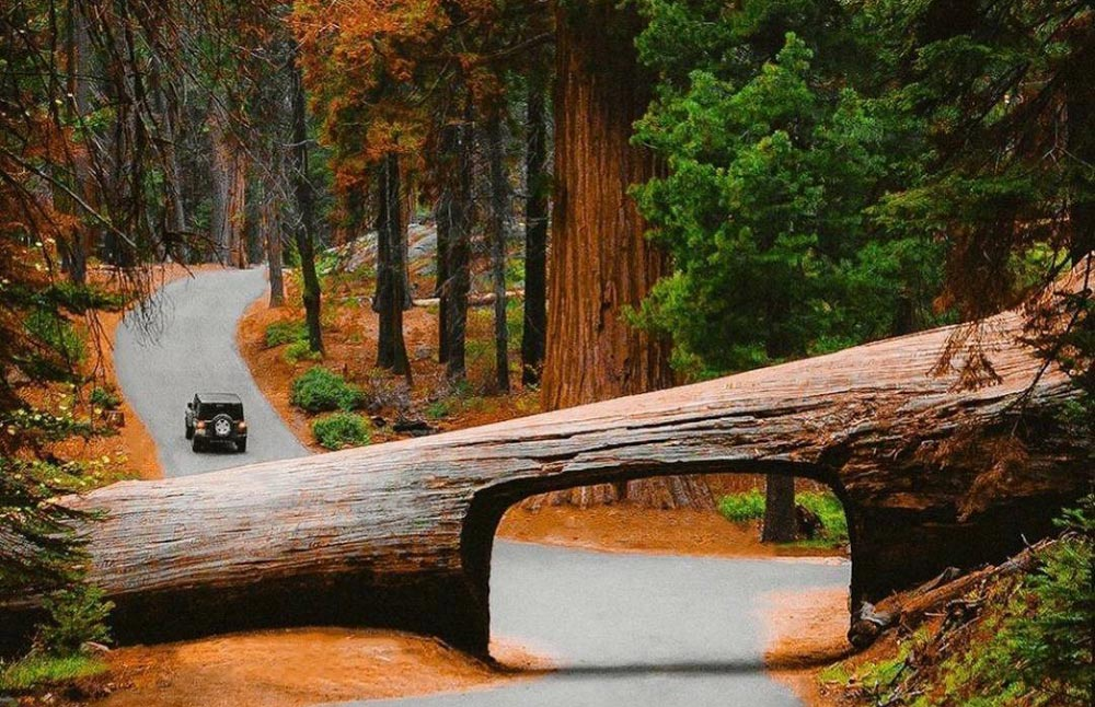 Best Time to Visit Sequoia and King Canyon National Park