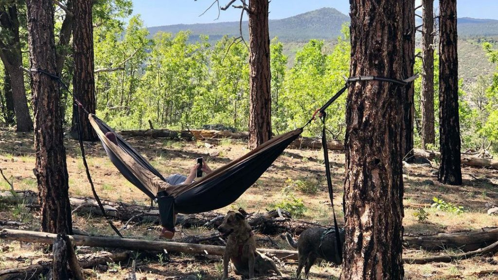 Kaibab National Forest Dispersed Camping