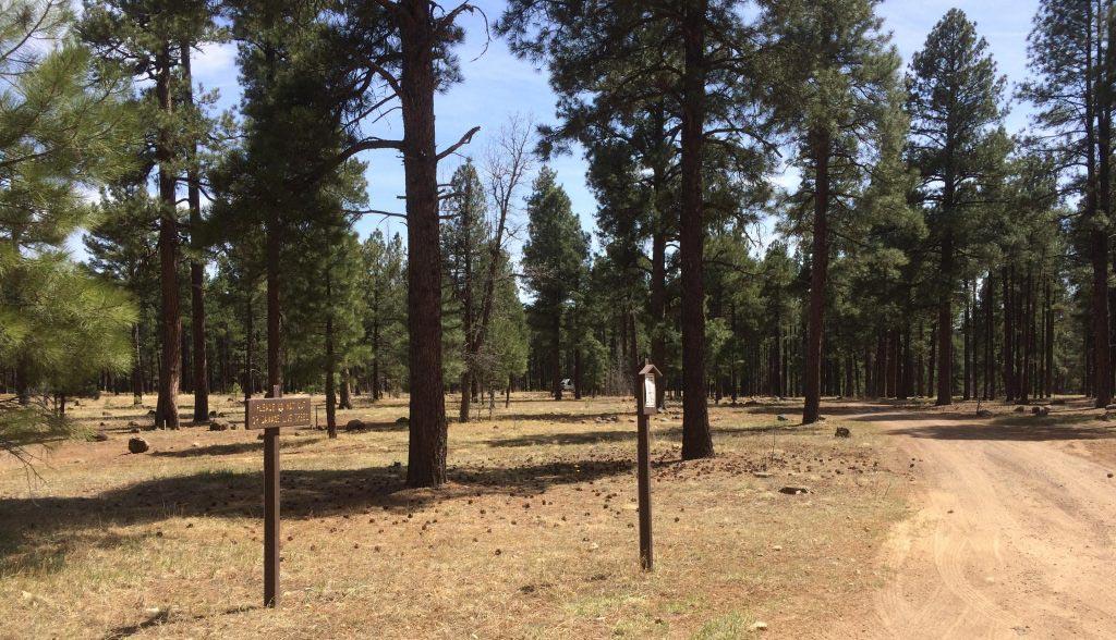 Pumphouse Wash Designated Dispersed Camping near Flagstaff