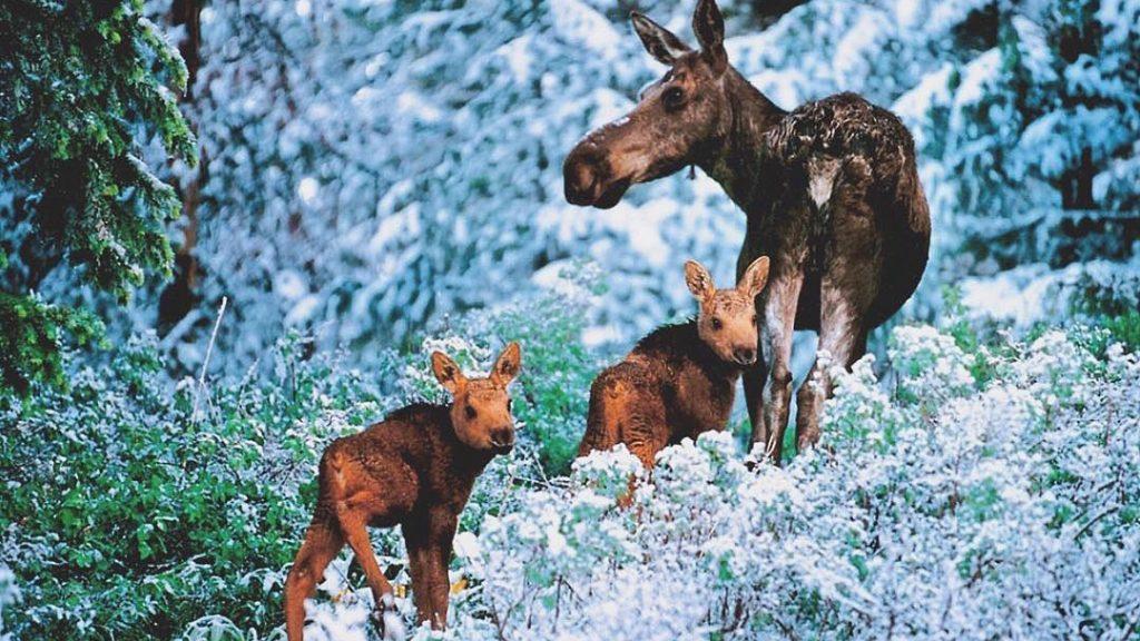 Spring in Grand Teton