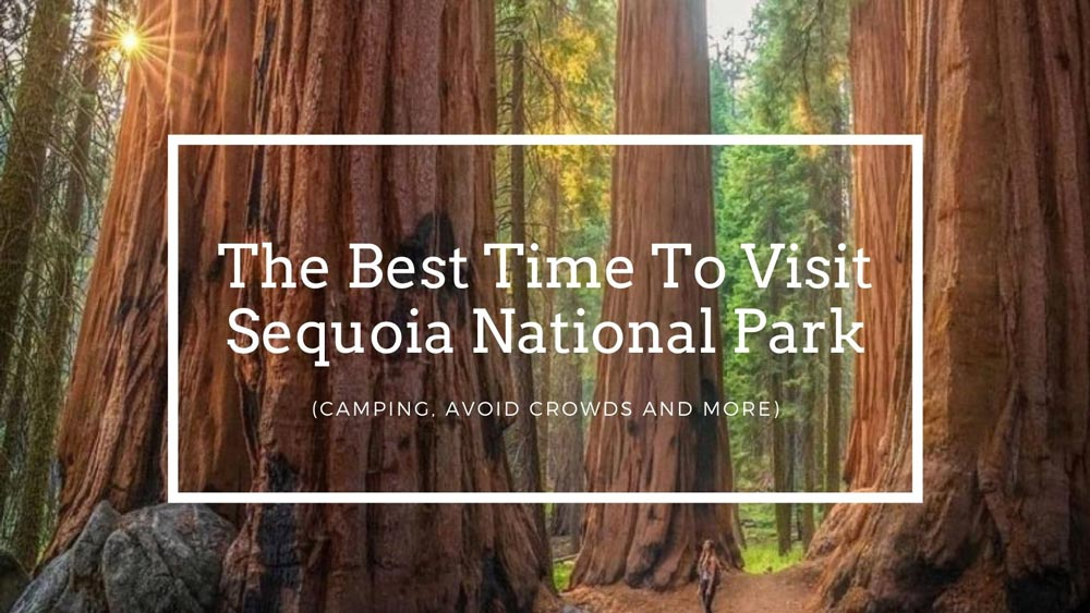 The Best Time To Visit Sequoia National Park