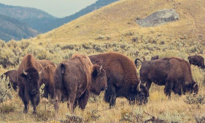 Best Time of the Year to See Wildlife in Grand Teton National Park